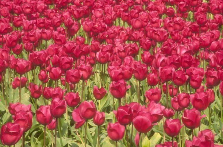 Levering af blomster